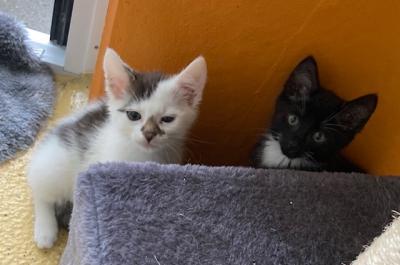 Tierheimfest zum Weltkatzentag